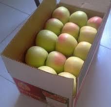 فروشگاه اینترنتی کارتن بسته بندی سیب